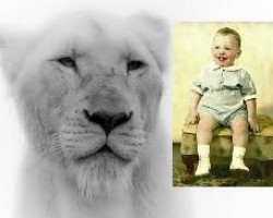 Whatcha Gonna Do Mr. White Shoe Boy When the American Lion Comes for You?
