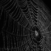 Oh, New Century…What a wicked web you weave…