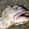William Black: JPMorgan: Fish Rot from the Head